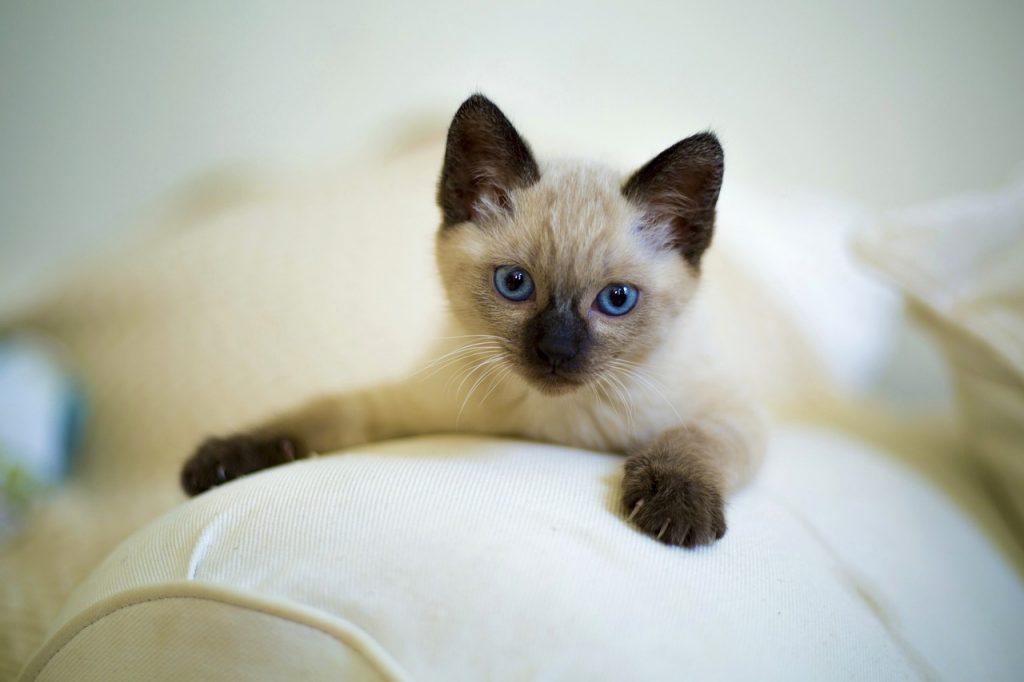 cute-3252251_1280